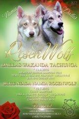 rosenwolf12345